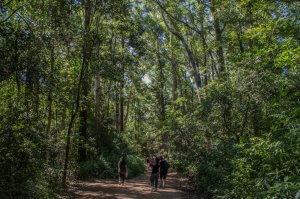 Punta del Este em março: parque Arboretum Lussich