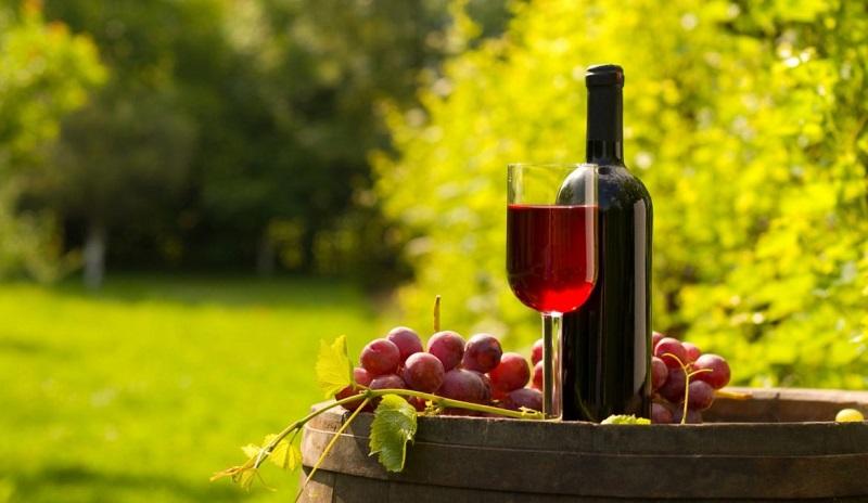 Vinho e vinícola - Uruguai